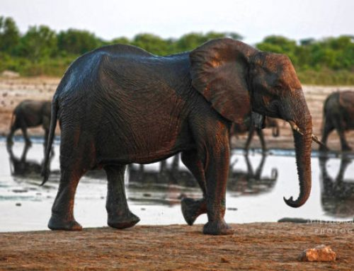 Botswana hunting proposal could put its tourism industry at risk